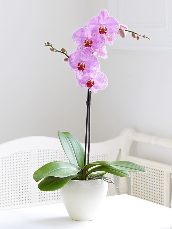 how to take care of orchids ice cubes